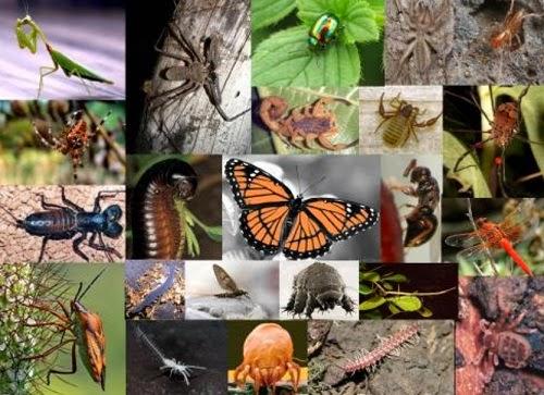 Artrópodes, Características Gerais do Filo Artrópodes