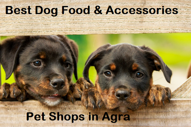 pet shop agra, agra pet shop, dog shop agra, pet shop in agra, dog shop near me agra, pet shops agra,dog sale and purchase agra