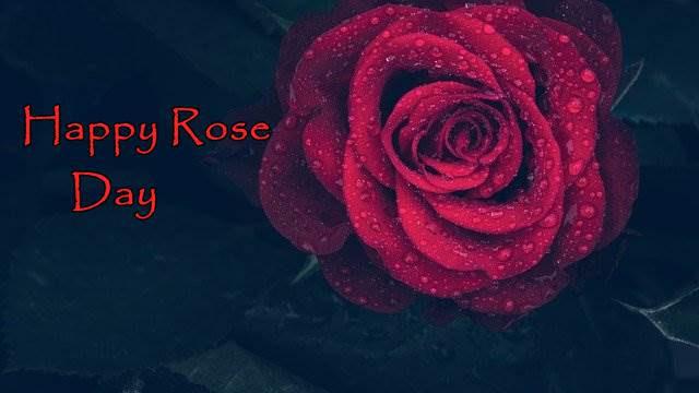 Happy rose Day 2021