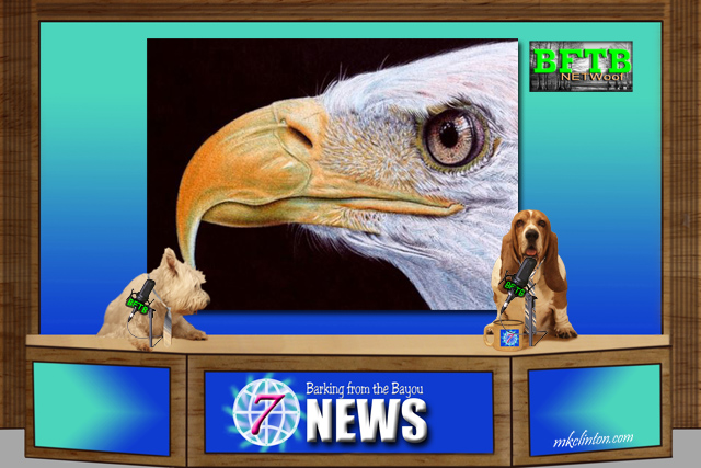 BFTB NETWoof News reports on 3-D beak for eagle