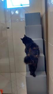 gatos subir em locais altos