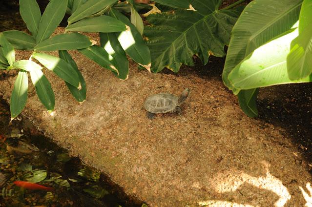 Cheyenne Botanic Gardens - turtle and fish