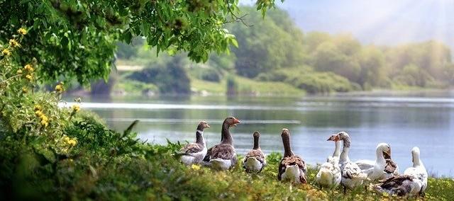 कांकरिया झील। कांकरिया लेक। कांकरिया तालाब। कांकरिया कार्निवल। Travel Teacher