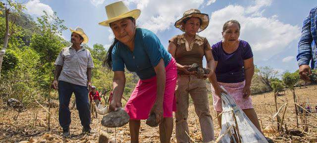 Mujeres que trabajan en un programa de conservación del suelo del Programa Mundial de Alimentos en El SalvadorWFP/Rein Skullerud