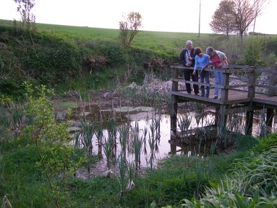 Winkleigh Ponds: Two farm ponds, one draining to the Taw