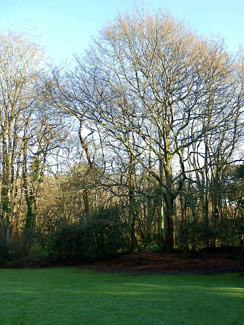Trees in Cornwall at Pinetum Gardens, Cornwall