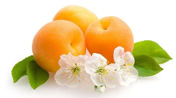 صور فاكهة المشمش