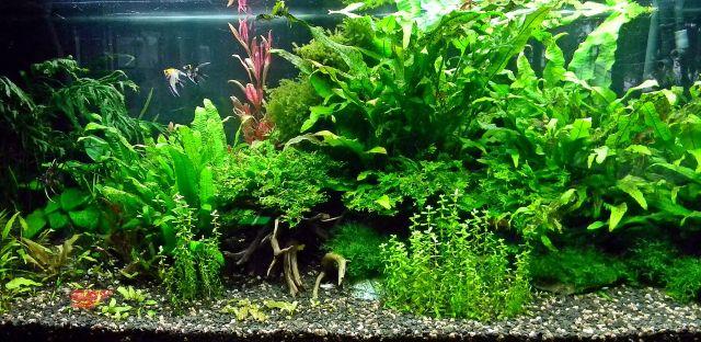 ryby, rośliny, palmiarnia, egzotyczne