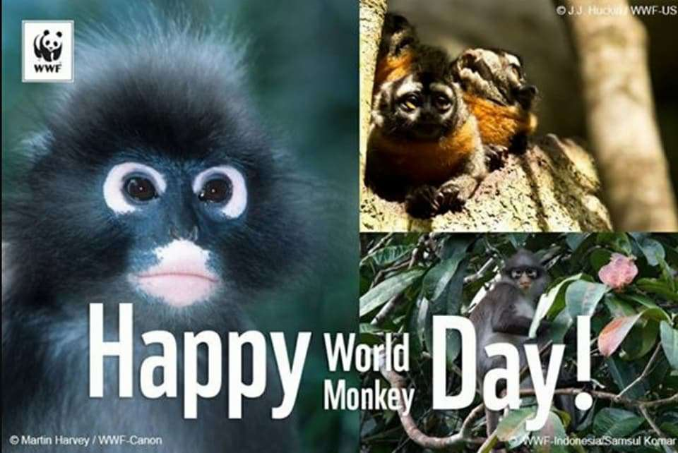 Monkey Day Wishes Images download