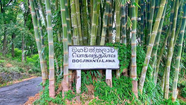 සුන්දර තේ කොමලී- බොගවන්තලාව 🌱🍃🏔 (Bogawanthalawa 🌱☘️🍃💐) - Your Choice Way