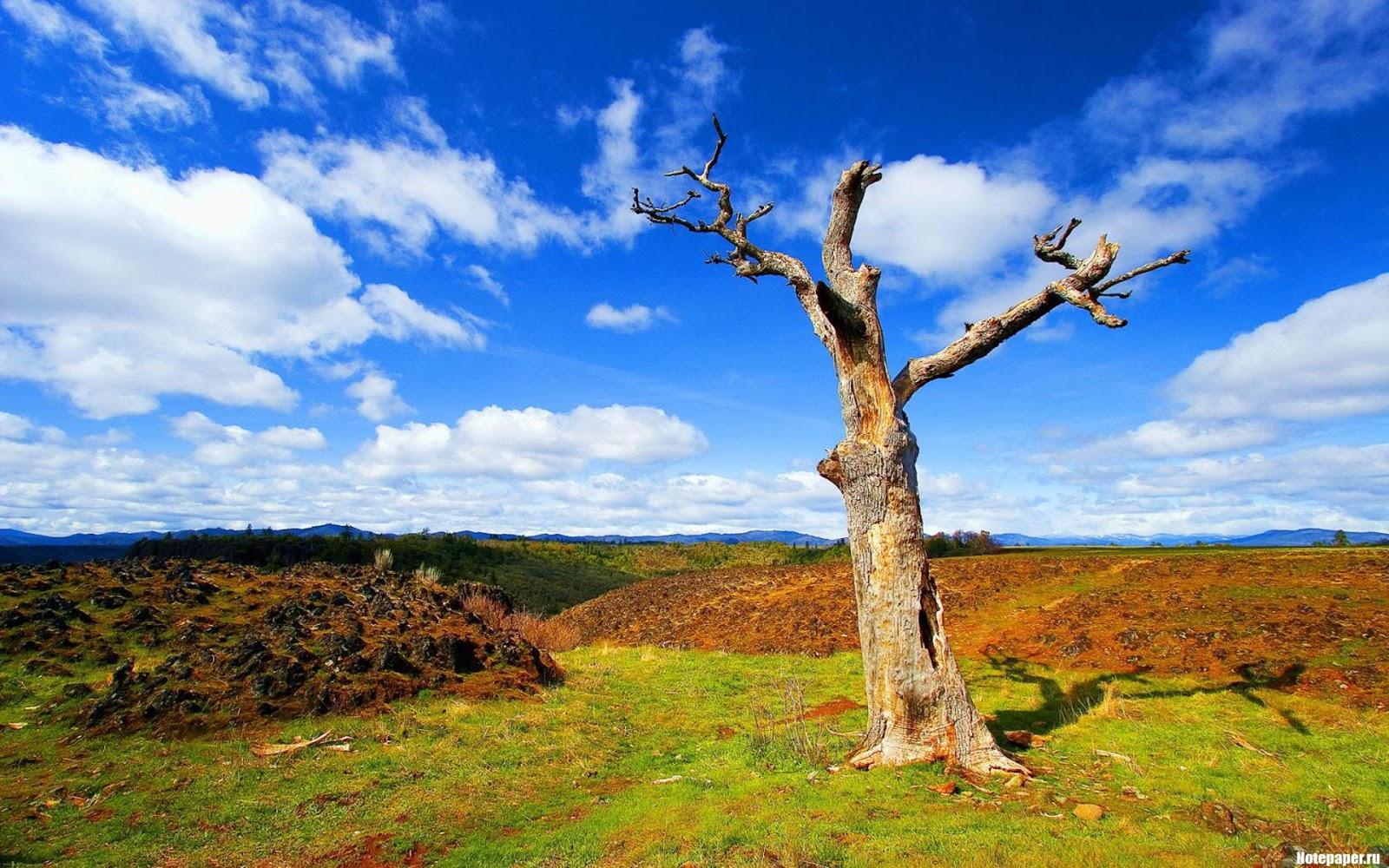 Nature Desktop Backgrounds