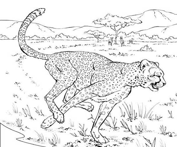 Coloriage Animaux Sauvage Liberate