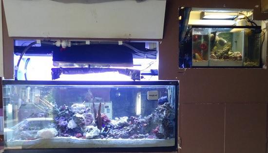 Overhead aquarium SUMP
