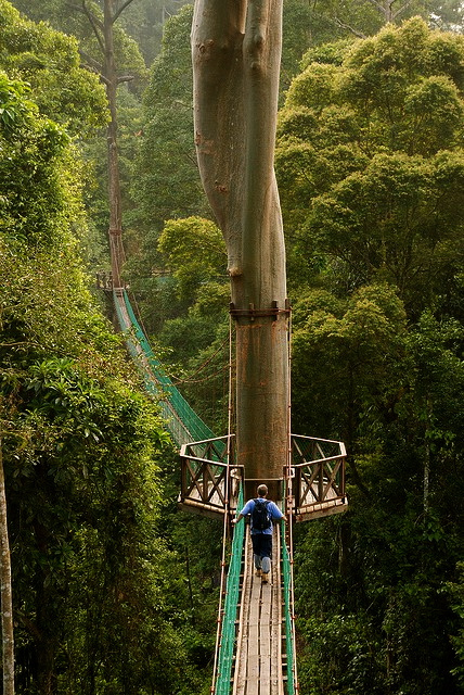 Forest Reserve Institute of Malaysia (FRIM) in Kuala Lumpur offers visitors the opportunity of enjoying a walk through a Malaysian Rainforest to help ... & mother nature: kuala lumpur rainforest and canopy walkway