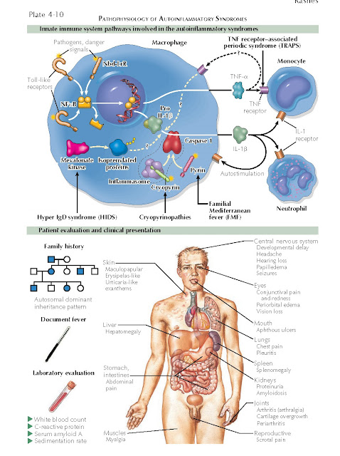 PATHOPHYSIOLOGY OF AUTOINFLAMMATORY SYNDROMES