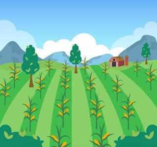 Corn Planting Techniques