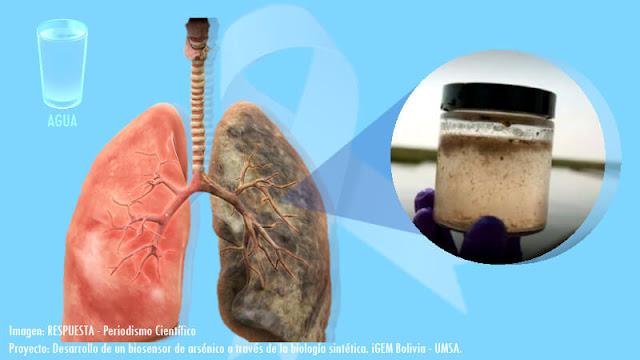 Se plantea detectar arsénico en el agua de consumo con la creación de un biosensor sintético