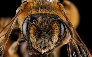 Η «γλώσσα» των μελισσών