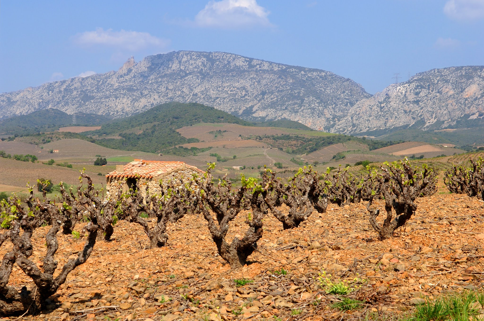 Roussillon: top 100 red wines