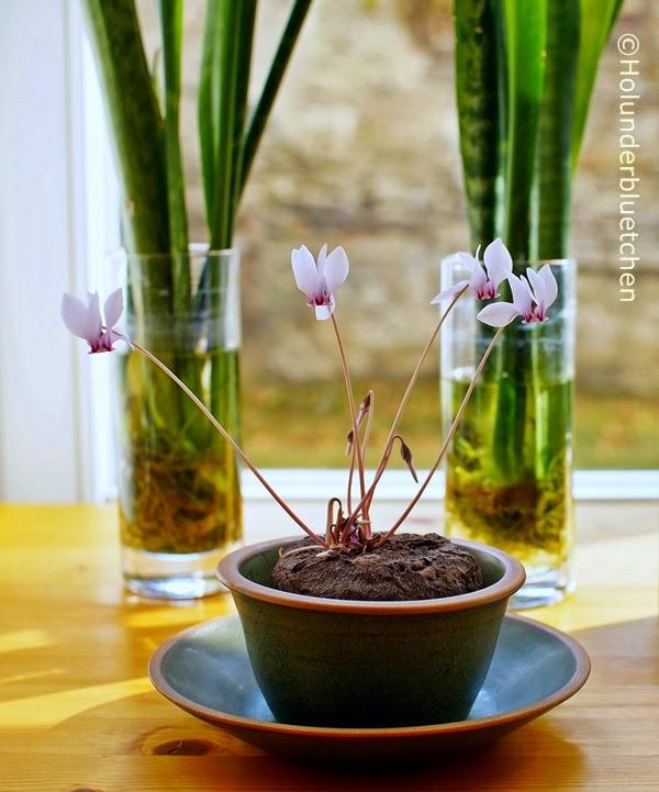 holunderbluetchen das fleischpflanzerl bl ht. Black Bedroom Furniture Sets. Home Design Ideas