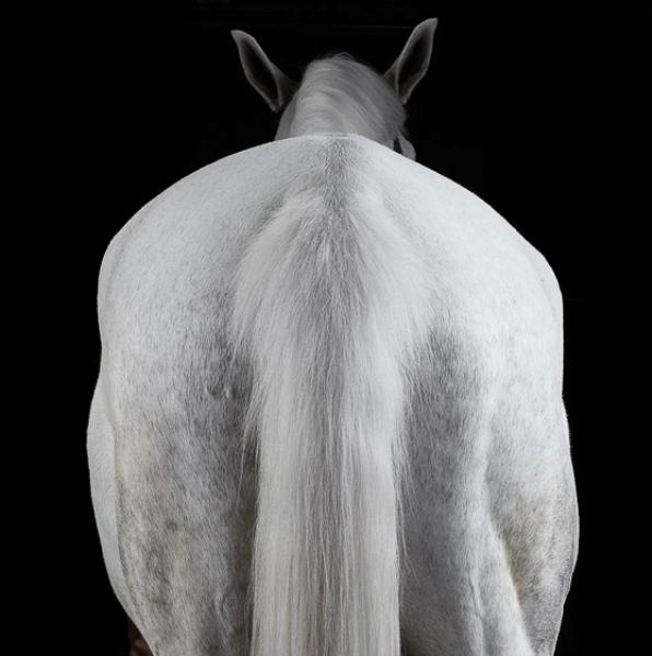 Красивые фотографии лошадей. Питер Сэмюэлс