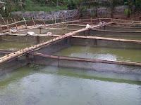Melakukan Budidaya Ikan Dalam Kolam Keramba Sangatlah Tepat