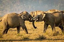 इंद्रावती राष्ट्रीय उद्यान छत्तीसगढ़, indravati national park chhattisgarh