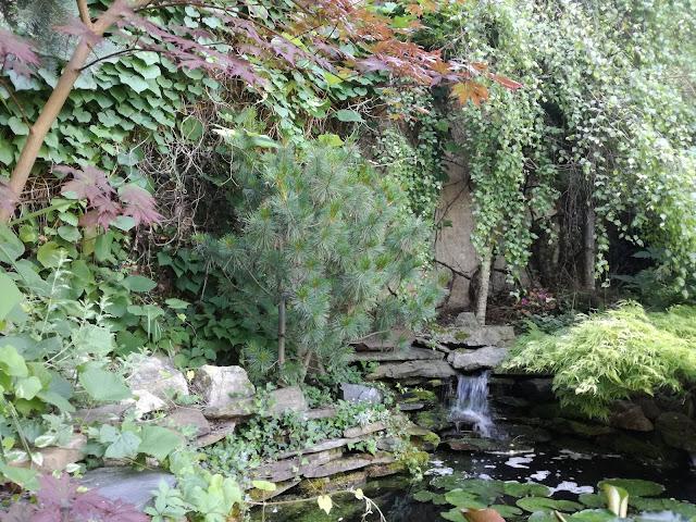 staw ogrodowy, oczko wodne