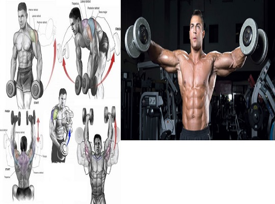 The 6 Most Effective Shoulder Dumbbell Exercises for V-taper Physique