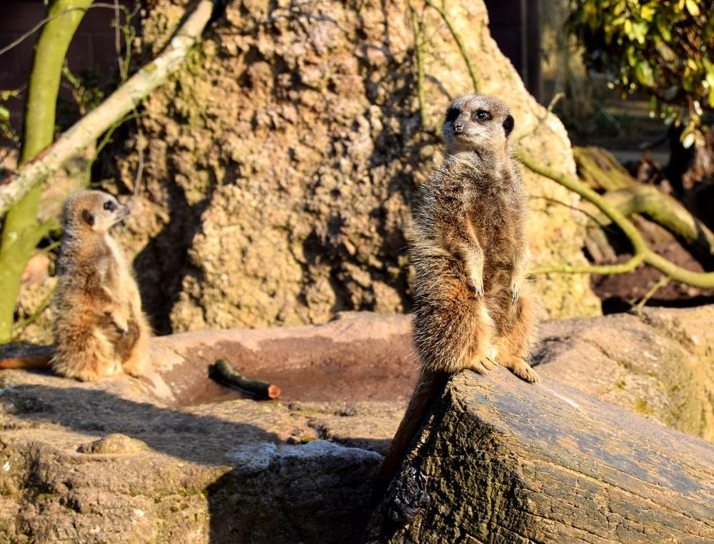 Twycross Zoo from 2018.