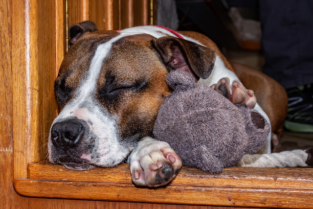 Photo of Ruby asleep with her new teddy