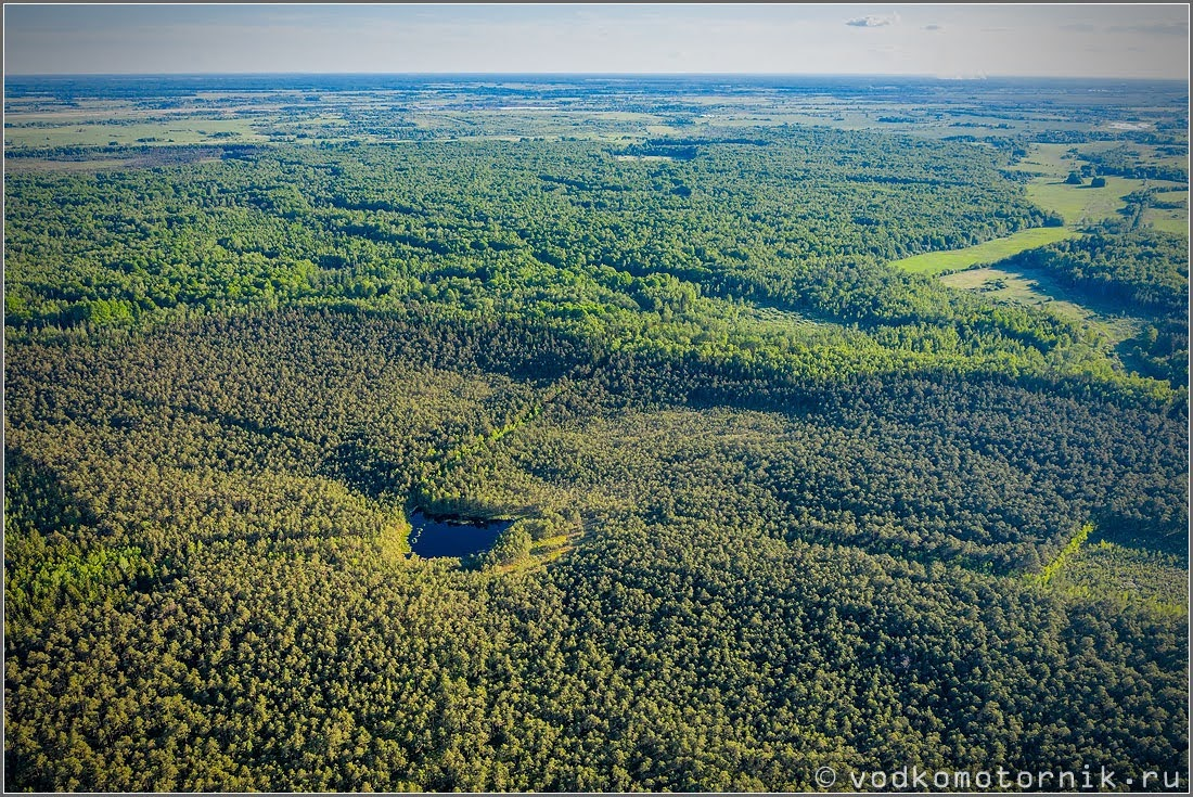 Красивые хвойные экологически чистые леса