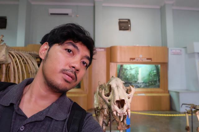 kerangka harimau sumatera di kebun raya bogor