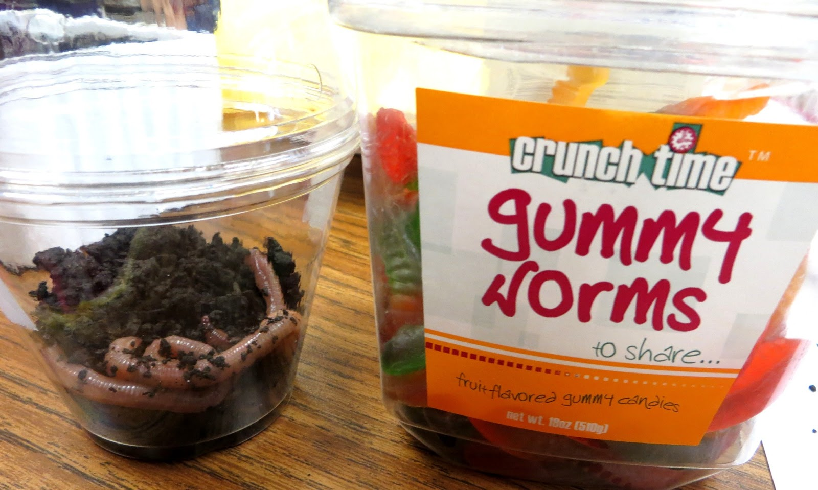 First Grade Wow Gummy Worms Vs Earth Worms
