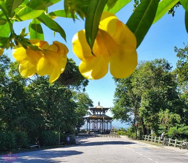 Parque Nacional da Tijuca - Estrada Dona Castorina e suas belezas