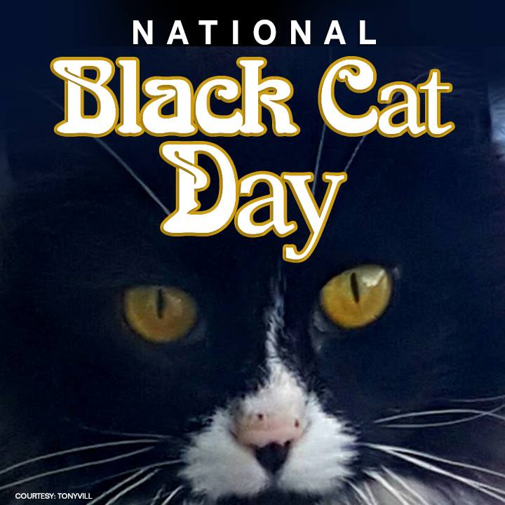 National Black Cat Day Wishes Unique Image