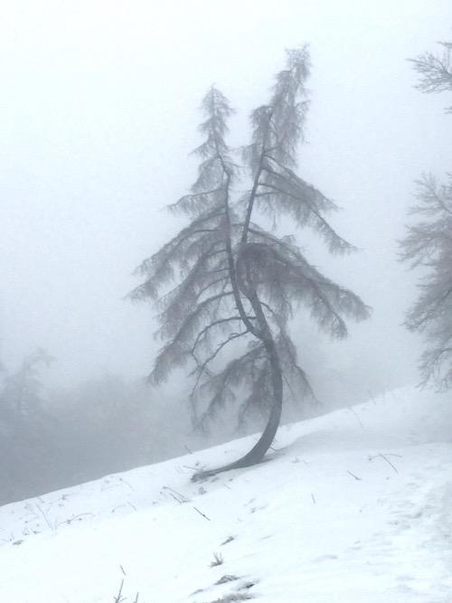 雪とモヤの中のダンシングツリー