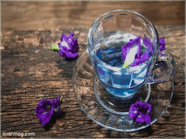 صور ورد 9 | Flowers Photos 9