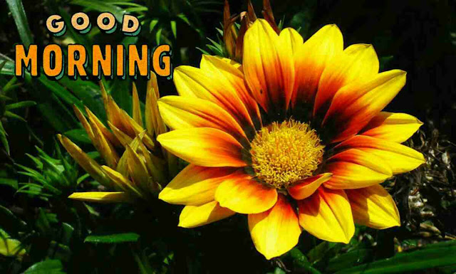 Beautiful good morning image with yellow wild flower