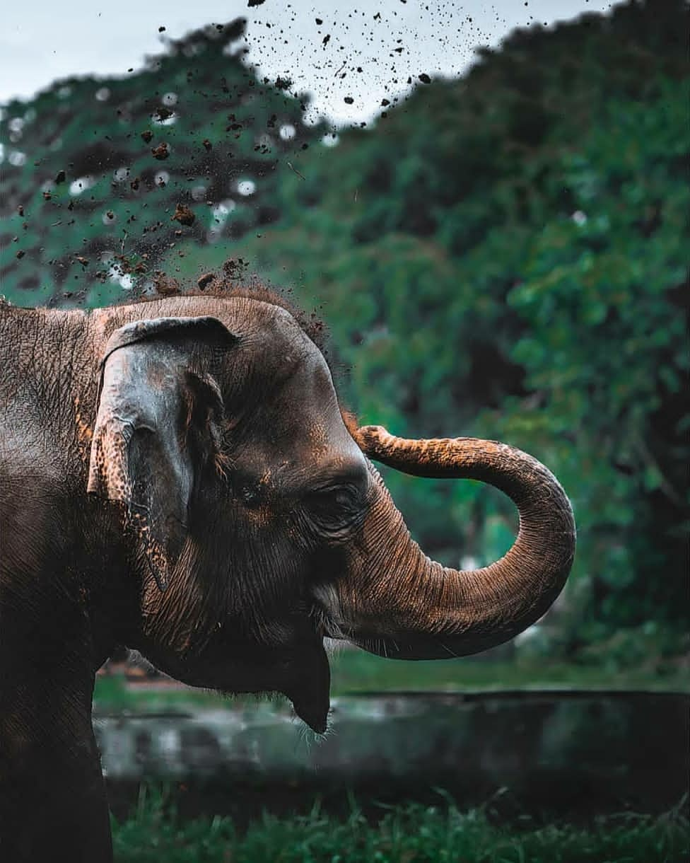 Elephant Editing Background Full Hd For Photoshop And