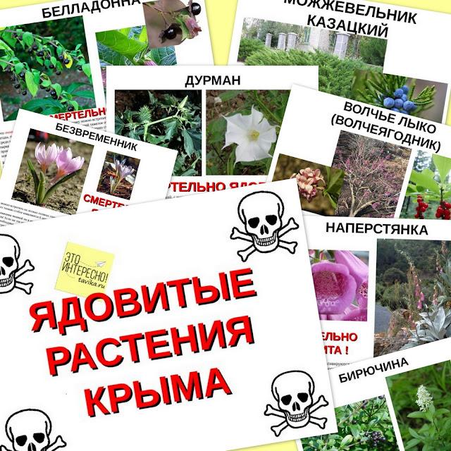презентация про ядовитые растения Крыма