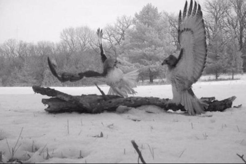 Another-Bird-Battle