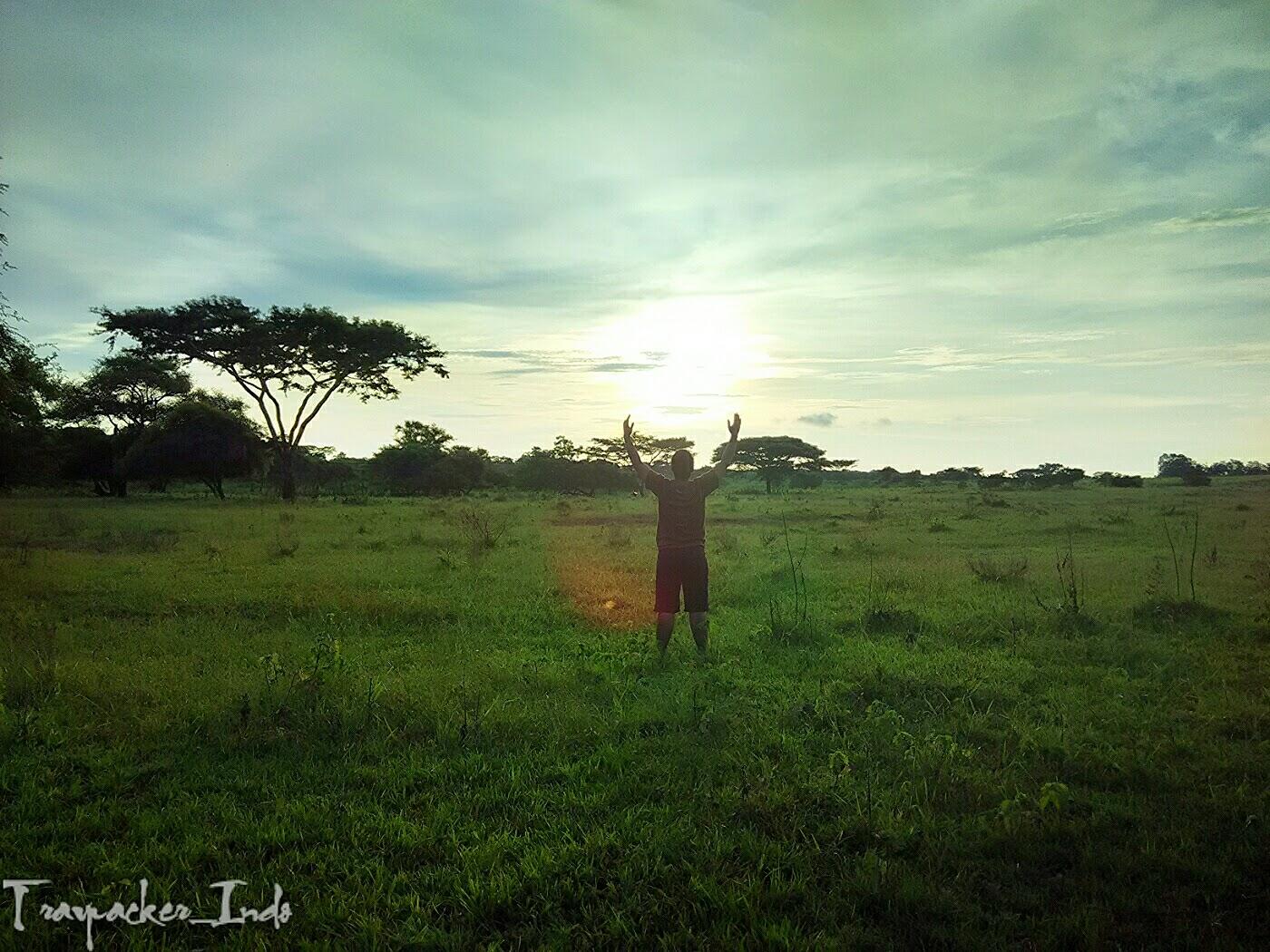 bekol savana tn baluran kabupaten situbondo, jawa timur, tiket masuk savana bekol, gunung baluran banyuwangi, pantai bama, luas savana bekol, camping di baluran, baluran national park, hutan pantai taman nasional baluran