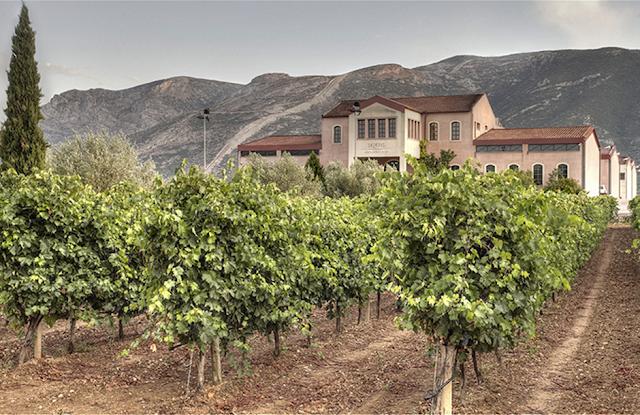 Κτήμα Σκούρα: Το κρασί ως σύγχρονο ελληνικό κλασικό έργο