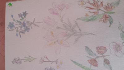 rysunek kwiatów 2