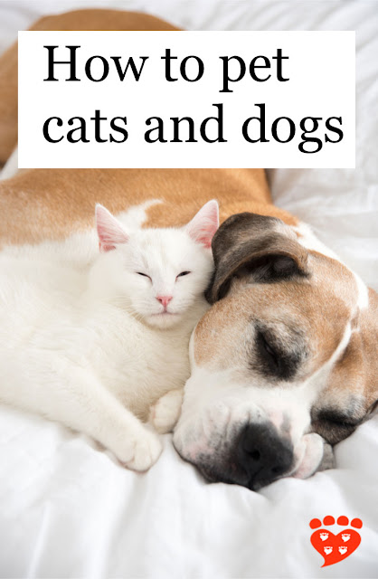 How to pet cats and dogs, like this white cat and Boxer dog snuggled together