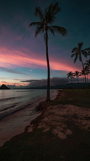 Aesthetic Palm Tree Sunset Beach Wallpaper