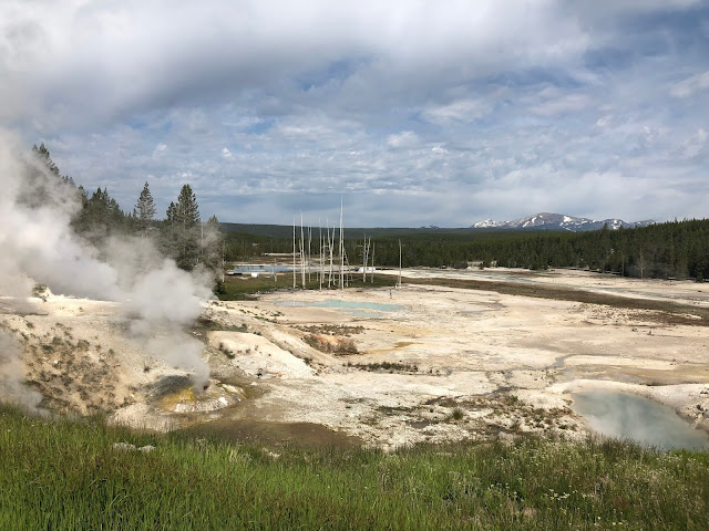 Tips and Tricks for Visiting Yellowstone National Park in June