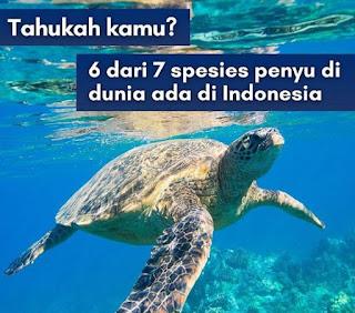 10 Fakta Luar Biasa Tentang Penyu Laut