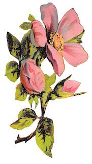 flower rose botanical art clipart illustration floral image